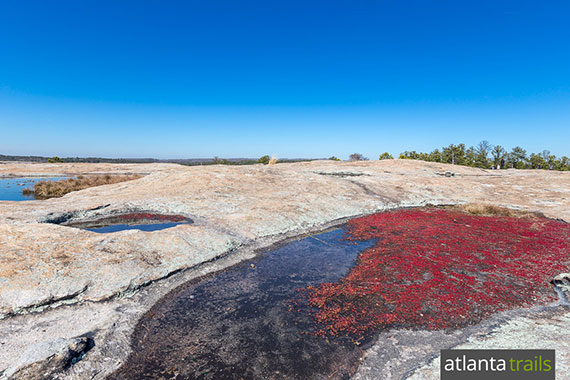 Hike this four-trail combo at Arabia Mountain to catch wildflowers and succulents in bloom