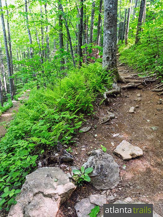 Hike to from Neels Gap to the Appalachian Trail, following the Byron Reece Trail through a mossy, fern-filled forest