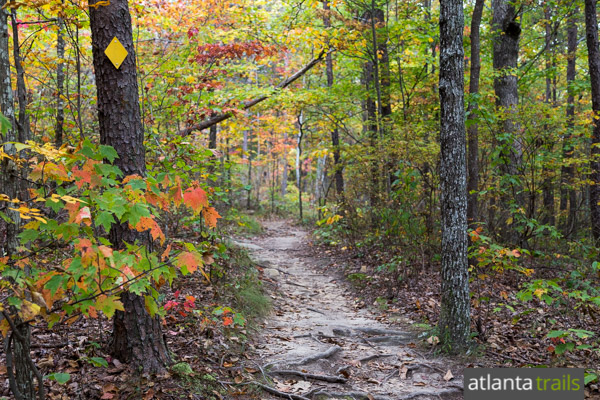 Hike the West Rim Loop Trail at Cloudland Canyon State Park
