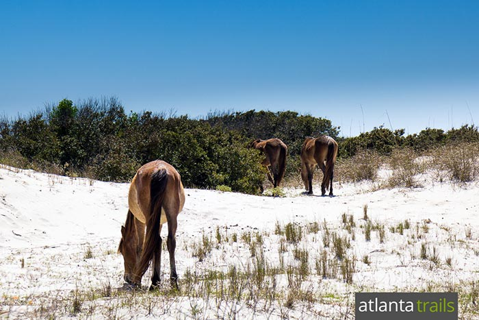 Hike to beautiful beaches and herds of wild horses on Cumberland Island, a remote barrier island on Georgia's coast