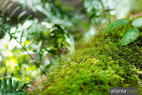 The Jacks River valley is filled with waterfalls, vibrant green fern and moss, and mushrooms