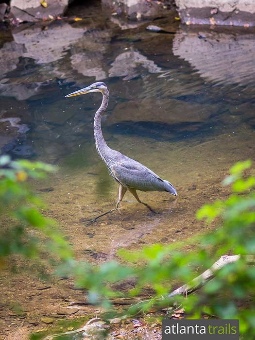 Explore the wildlife-rich forest on the banks of the Chattahoochee River in Atlanta on the West Palisades Trail