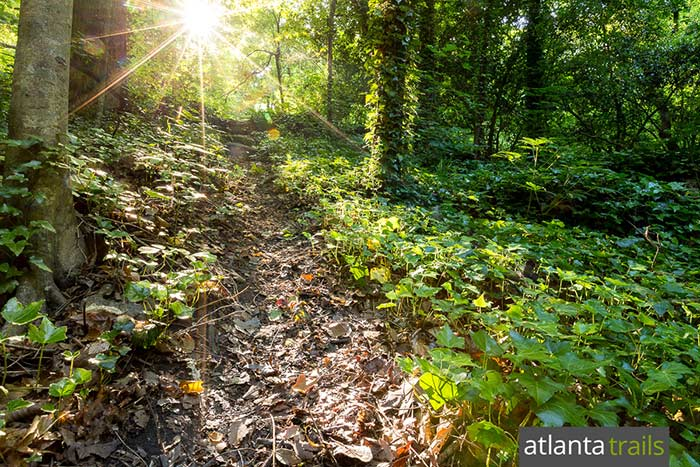 Explore an ivy-covered ridge on the Chattahoochee River in Atlanta, hiking the Powers Island Trail
