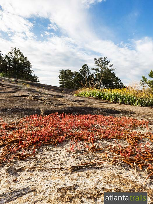 Hike Stone Mountain near Atlanta through wide granite fields dotted with wind-swept grasses and wildflowers
