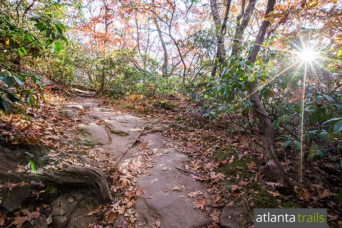 Hike Vogel State Park to Blood Mountain, exploring a rocky forest filled with mountain laurel and rhododendron