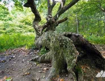 Appalachian Trail: Bly Gap