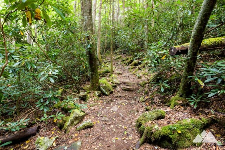 Hike the High Shoals Falls Trail through a lush forest to two stunning waterfalls near Helen, GA
