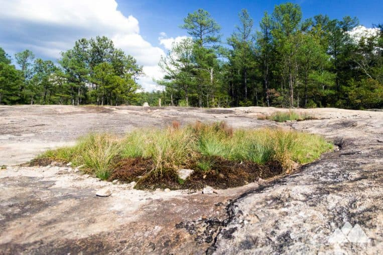 Arabia Mountain Top Trail: hike through wide-open granite fields, cratered pockets of wildflowers and windswept grasses near Atlanta