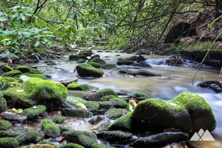 Hike the Bear Creek Trail through a lush, mossy forest in North Georgia near Ellijay