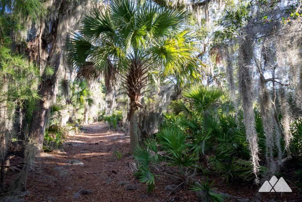 Skidaway Island State Park: hiking the Big Ferry Trail near Savannah, GA