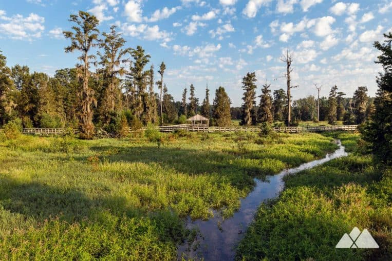 Explore the beautifully scenic Phinizy Swamp Nature Park in Augusta, Georgia, hiking through a wildlife-filled marshland on the banks of the Savannah River