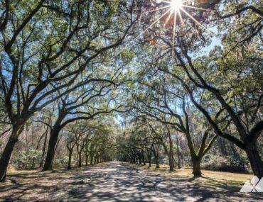 Wormsloe Historic Site: hiking in Savannah