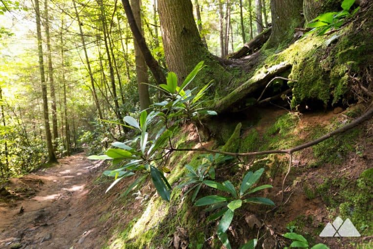 Hike the Benton MacKaye Trail through a lush, mossy forest near Blue Ridge, GA, to the tumbling waterfall at Fall Branch Falls