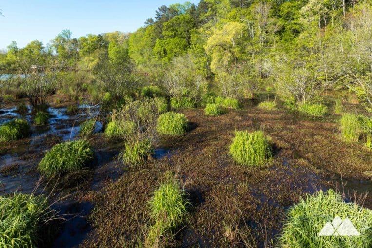 Top scenic Atlanta running trails: run the Ivy Creek Greenway in George Pierce Park in Suwanee