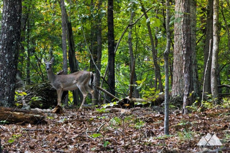 Hike or run a scenic loop in Little Mulberry Park, exploring a wildlife-filled forest in metro Atlanta's Gwinnett County