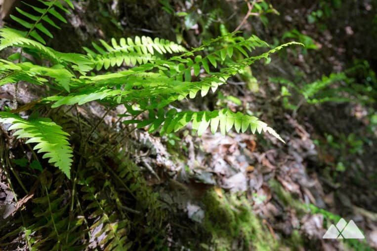 Angel Falls Trail: hike through a fern-filled forest to two waterfalls near Lake Rabun