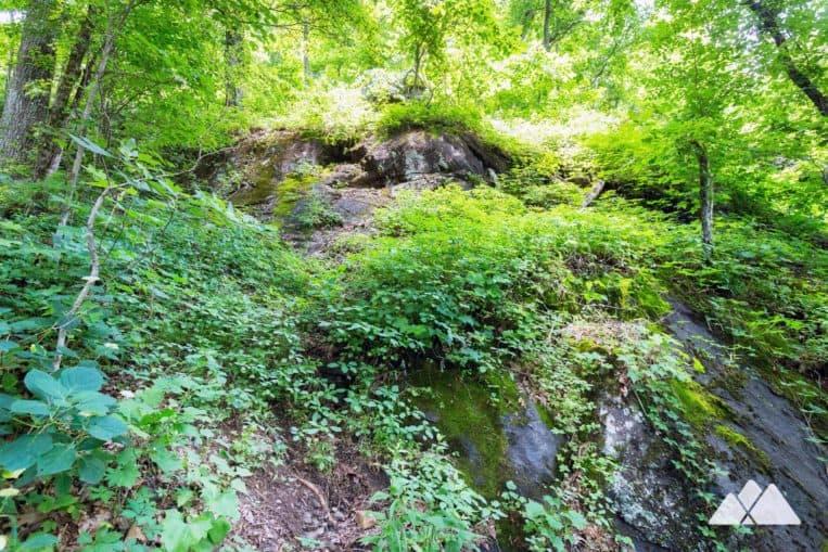 Hightower Gap to Cooper Gap on the Appalachian Trail