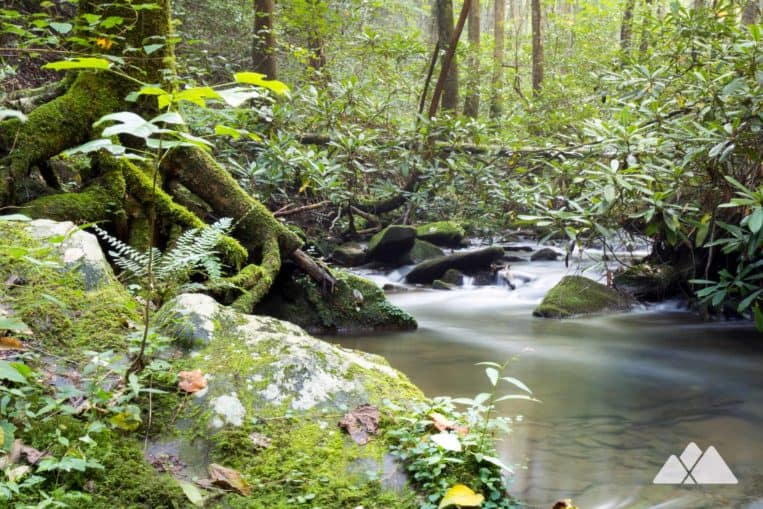 Bear Creek Trail: hike through a lush, mossy forest to the second oldest tree in Georgia