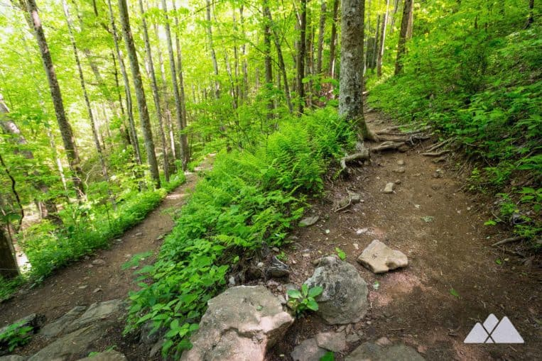 Byron Reece Trail: hike from Neels Gap to the Appalachian Trail through a lush fern-filled forest