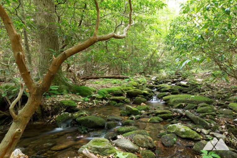 Byron Reece Trail: hike to Blood Mountain, exploring a gorgeous, mossy creek valley at Neels Gap