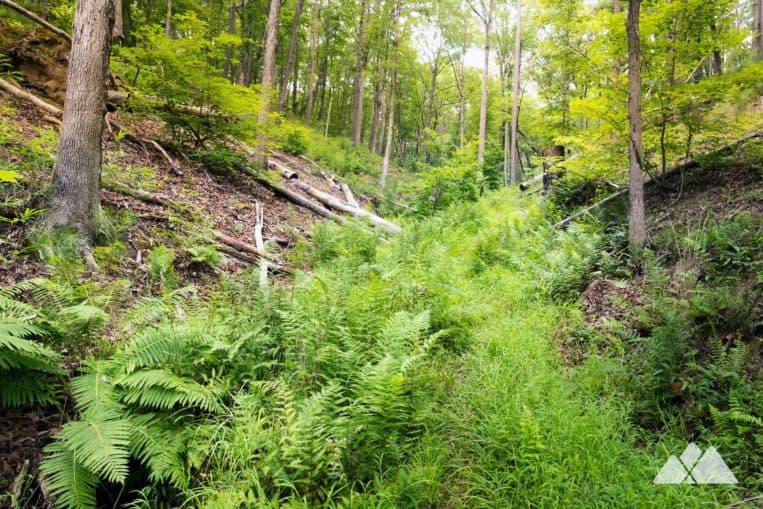 Carters Lake Oak Ridge Nature Trail