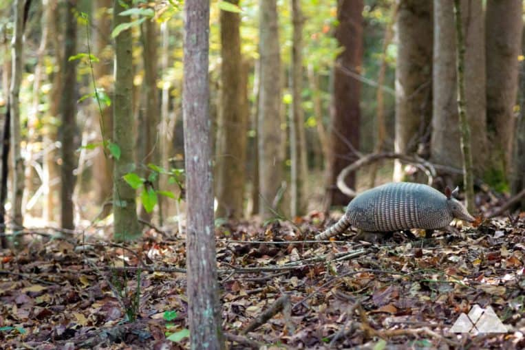 Chattahoochee Bend State Park: hike through a wildlife-filled forest and a chance to spot foraging armadillos on the river's scenic banks