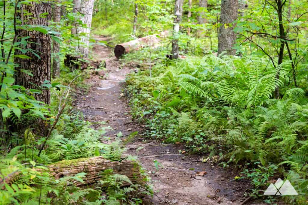 Chattahoochee Gap: Appalachian Trail from Unicoi Gap