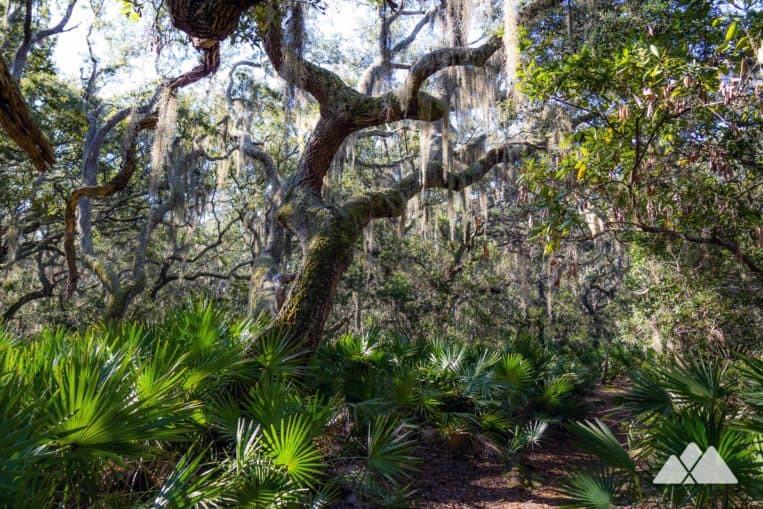 Cumberland Island National Seashore: explore Georgia's coast, hiking through a moss-draped forest of gnarly oak trees to exceptionally beautiful beaches