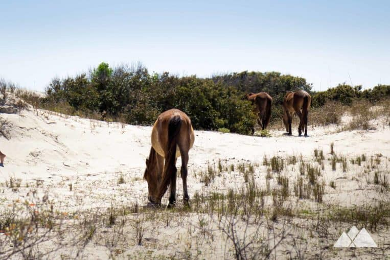 Cumberland Island: hike to beautiful beaches and herds of wild horses on a remote barrier island in Georgia
