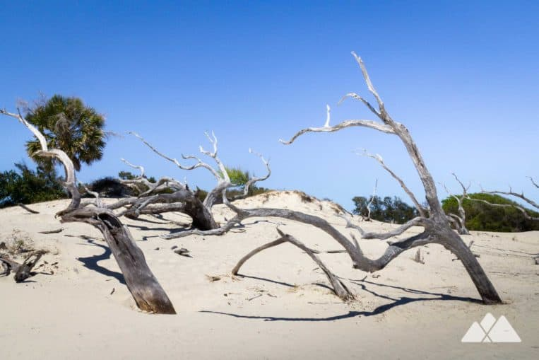 Top camping and backpacking spots in Georgia: Cumberland Island is a beautiful barrier island with secluded beaches, wild horses and mansion ruins