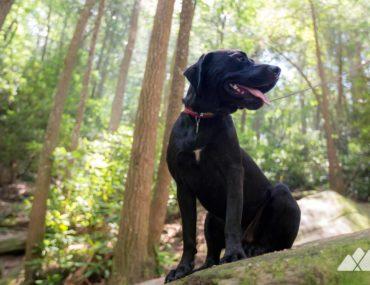 Georgia's best hikes with dogs: our top 10 favorite dog-friendly trails