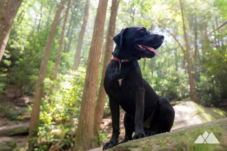 Hiking Gear List: our favorite dog gear for the trail