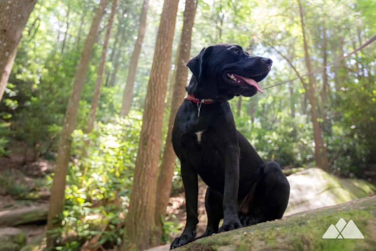 Georgia's best hikes with dogs