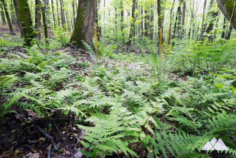 24-Gun Trail: hike Kennesaw Mountain's lower elevations, where fern and wildflowers blanket the forest floor