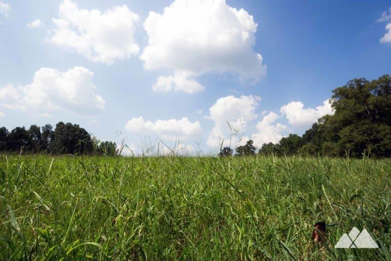 Hike through grassy Civil War battlefields at Kennesaw Mountain National Battlefield Park