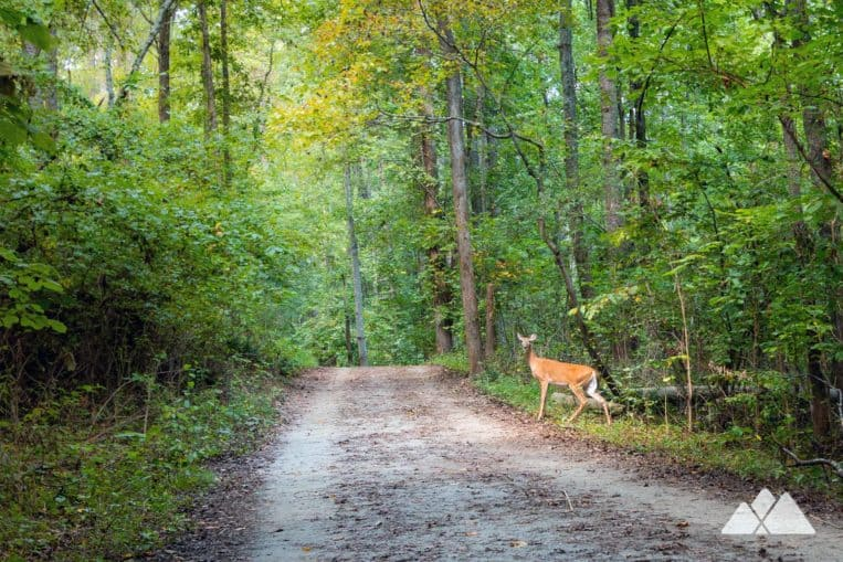 Hike the 11-mile Kennesaw Mountain Battlefield Trail north of Atlanta, exploring a wildlife and wildflower-filled forest and Civil War battlefields