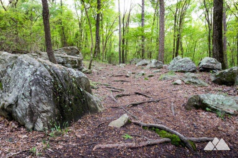 Kennesaw Mountain Environmental Trail: hike through an educational, scenic forest in metro Atlanta