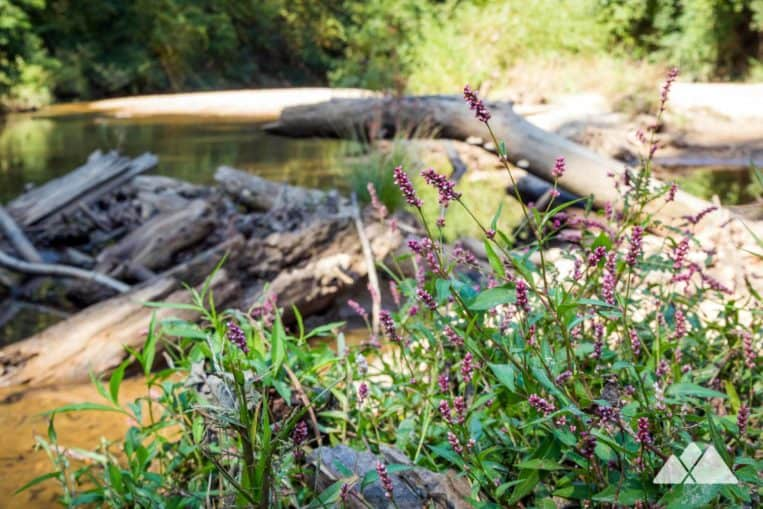 Morningside Nature Preserve: explore the sandy shores of South Peachtree Creek in Atlanta