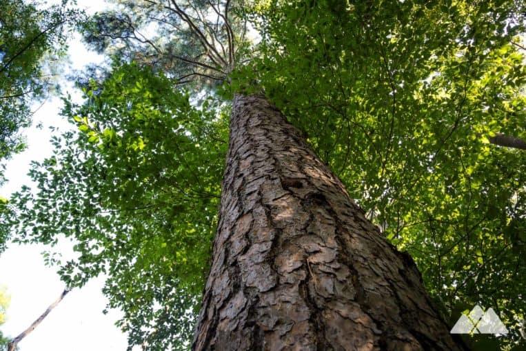 Morningside Nature Preserve Trail in Atlanta