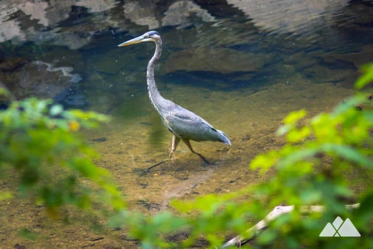 Paces Mill Park: explore a wildlife-rich forest on the banks of the Chattahoochee River on the West Palisades Trail