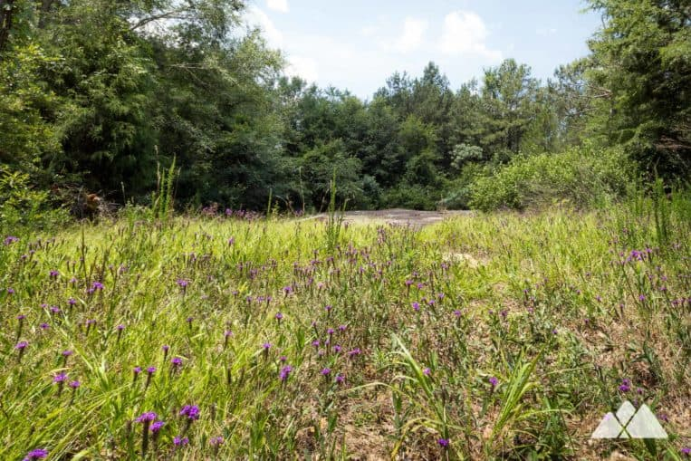 Panola Mountain State Park: follow a paved trail to beautiful fields of wildflowers and wide rock outcrops near Atlanta