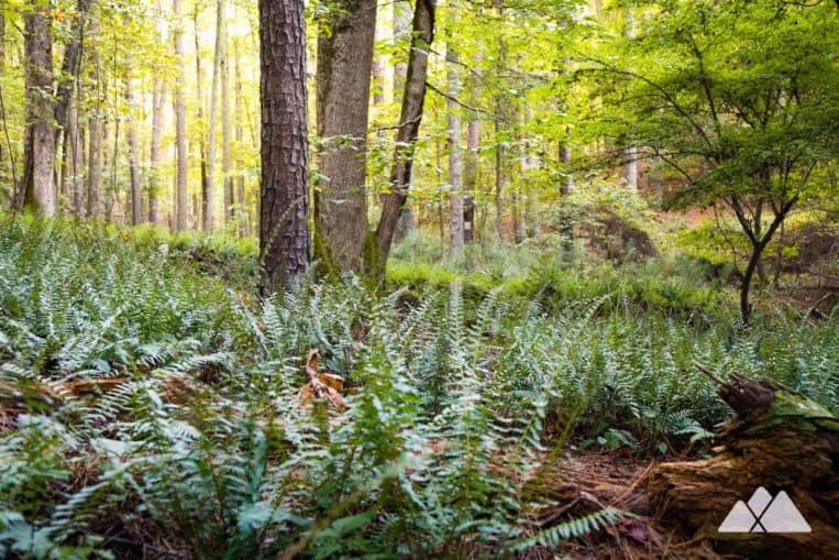 Homestead Trail: explore a fern-filled forest on the banks of Allatoona Lake at Red Top Mountain State Park