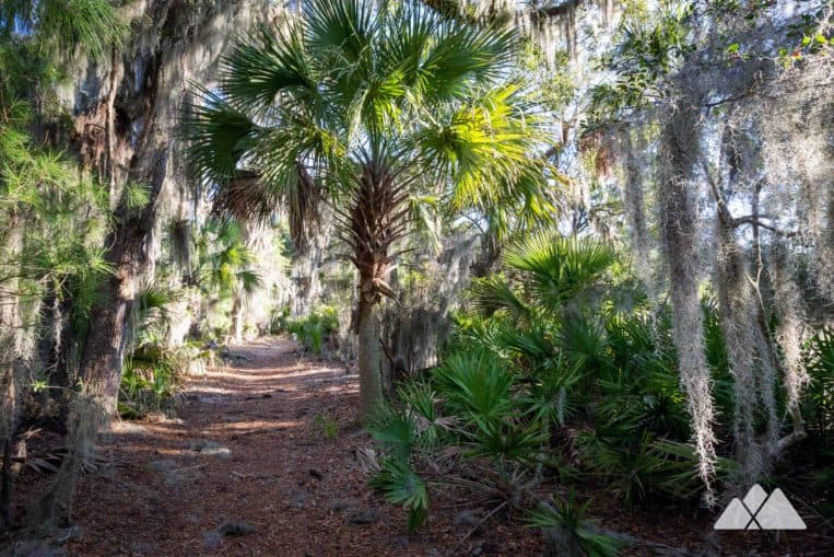Skidaway Island Big Ferry Trail: top hikes near Savannah, GA