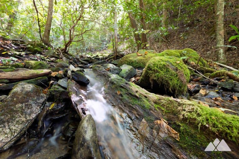 Smith Creek Trail: hike from Unicoi State Park through a mossy, creek-filled forest to Anna Ruby Falls