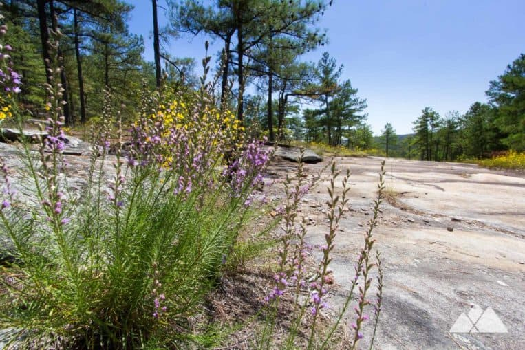 Hike the Stone Mountain Walk Up Trail through wide granite fields dotted with wind-swept grasses and wildflowers