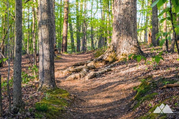 Best running trails near the UGA campus: the State Botanical Garden of Georgia