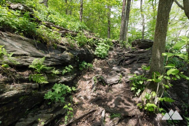 Tesnatee Gap: hike the Appalachian Trail, climbing through a rocky, fern-filled forest to Cowrock Mountain