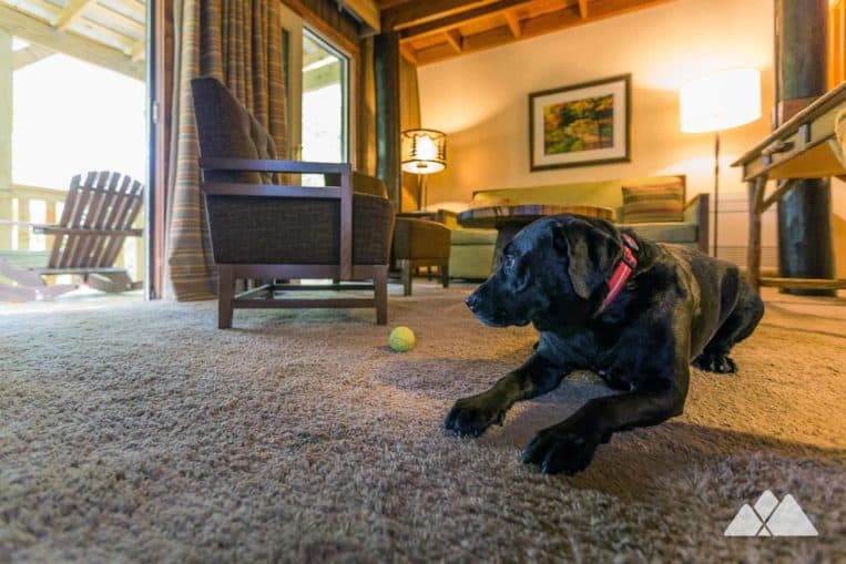 Best dog-friendly cabins near Helen, GA: our review of the retro Unicoi State Park barrel cabins