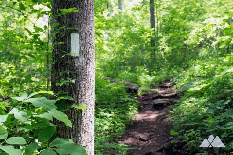 Hike the Appalachian Trail from Woody Gap through a lush North Georgia forest