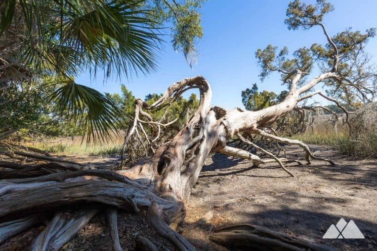 Wormsloe Historic Site: hike to sweeping views of marshy grassland framed by old, gnarled, moss-draped trees near Savannah, GA